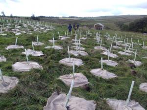 The Hebden Bridge Transition Trees project