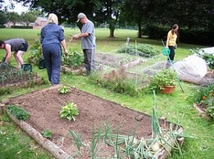 The Louth community garden.