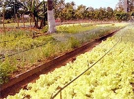 buy social ecological restoration in