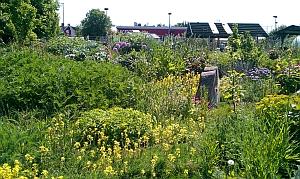 green backyard growing spaces
