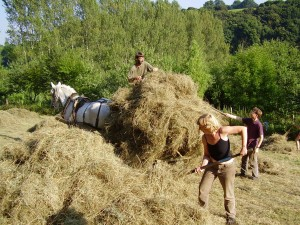 Many hands make light work - Haymaking at Tinkers Bubble